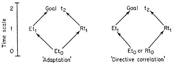 Emery (1996), Figure 1